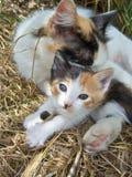 猫本质上 免版税库存照片
