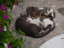 猫杂乱的一团 免版税库存照片