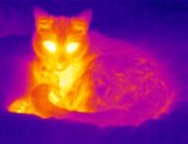 猫松弛自计温度计 免版税图库摄影