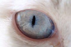 猫极大详细资料的眼睛 免版税库存照片