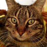 猫枪口 免版税图库摄影
