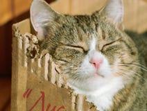 猫枯萎了 免版税库存照片