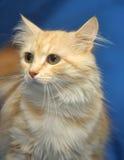 猫柔和的桃子颜色 库存照片