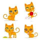 猫桔子平纹 免版税库存照片