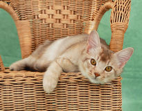 猫椅子柳条 库存图片