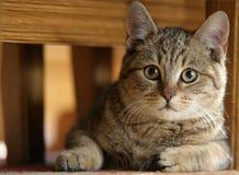 猫椅子 库存照片