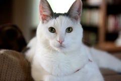 猫模型 免版税库存图片