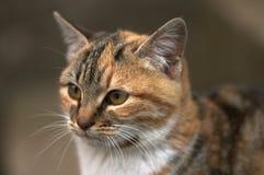 猫横向纵向 库存照片