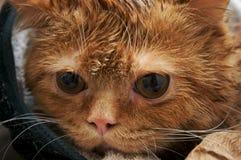 猫橙色年轻人 免版税库存照片
