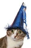 猫欢乐滑稽的帽子 免版税库存照片