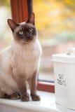 猫款待 库存图片