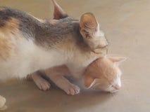 猫母亲 库存图片