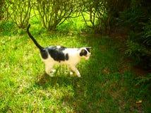 猫比赛在庭院里 免版税库存图片