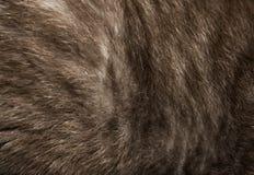 猫毛皮特写镜头纹理  长方形水平的背景 免版税库存照片