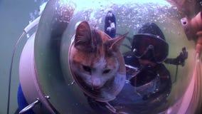 猫水下反射阳光的背景的轻潜水员  影视素材