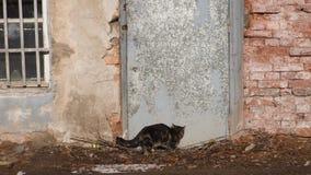 猫沿墙壁偷偷地走 免版税图库摄影