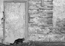猫沿墙壁偷偷地走 免版税库存照片