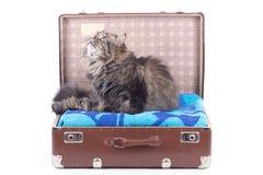 猫波斯坐的手提箱葡萄酒 库存照片