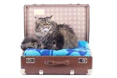 猫波斯坐的手提箱葡萄酒 图库摄影