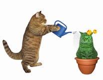 猫浇灌异常的仙人掌 免版税库存图片
