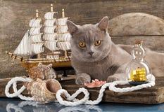 猫海军陆战队员风船 免版税库存图片