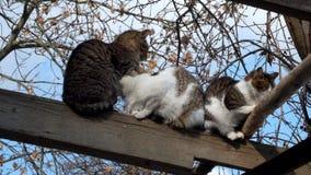 猫温暖了互相挤作一团 影视素材