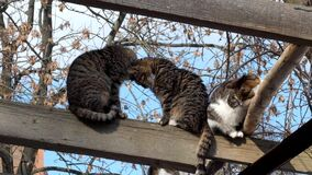 猫温暖了互相挤作一团 股票录像