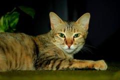 猫温暖太阳 免版税库存照片