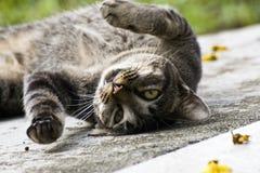 猫滚 库存图片