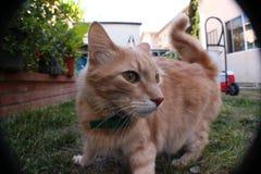 猫激发 库存图片