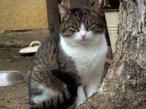 猫灰色白色 免版税库存照片