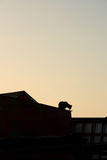 猫热屋顶镀锡 免版税库存照片