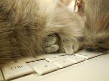 猫爪子,在膝上型计算机 免版税库存图片