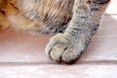 猫爪子 库存照片