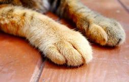 猫爪子s 库存图片
