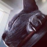 猫爪 库存图片