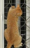 猫爬上 库存图片