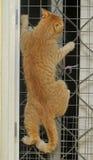 猫爬上 免版税库存照片