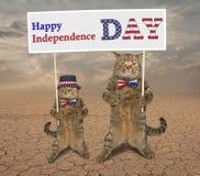 猫爱国者13 免版税库存图片
