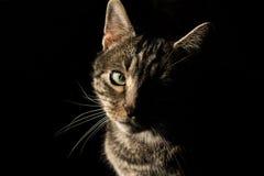 猫爱 图库摄影