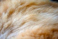 猫特写镜头的羊毛 免版税库存图片
