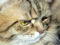 猫特写镜头的枪口 免版税库存照片