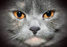 猫特写镜头纵向 库存照片