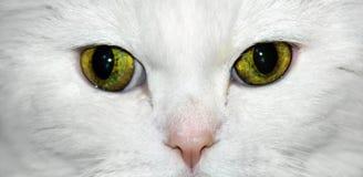 猫特写镜头 库存照片
