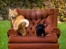 猫狗和椅子 免版税库存照片