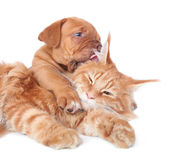 猫狗 库存图片