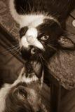 猫狗 图库摄影