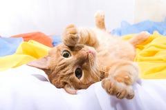 猫狡猾嬉戏 免版税库存照片