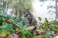 猫狩猎在城市公园 库存照片