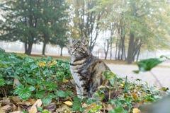 猫狩猎在城市公园 免版税库存图片